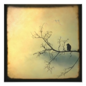 mysterious_bird_photo-rd002a4f780124d338aa6b3e11e6e7478_fknf_8byvr_324